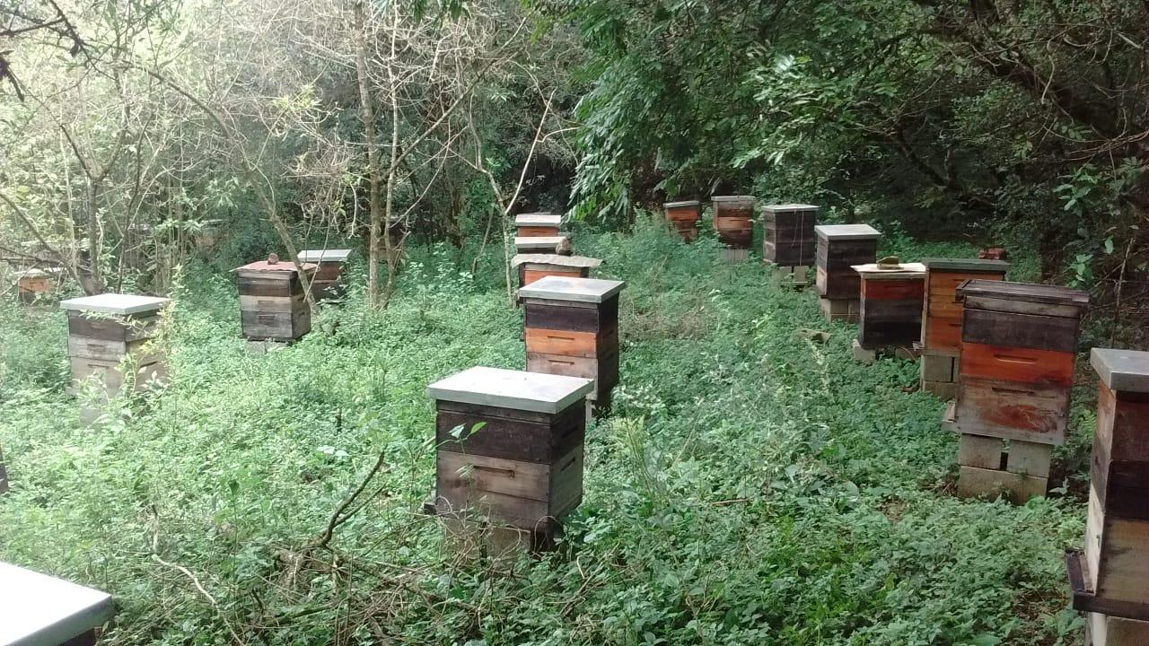 Local onde houve morte de abelhas em Ijuí